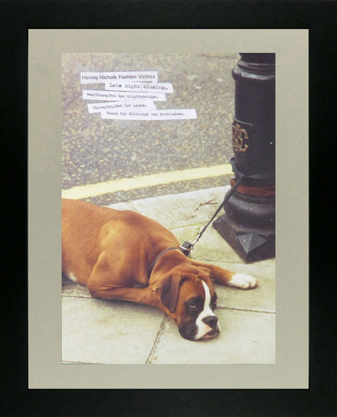 Harvey Nicholls Boxer dog on pavement (Advert)