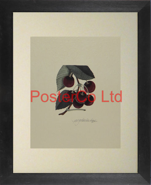"Cherries - Peg Wheeler Hope - Artbeats 1990 - Framed Print - 14""H x 11""W"
