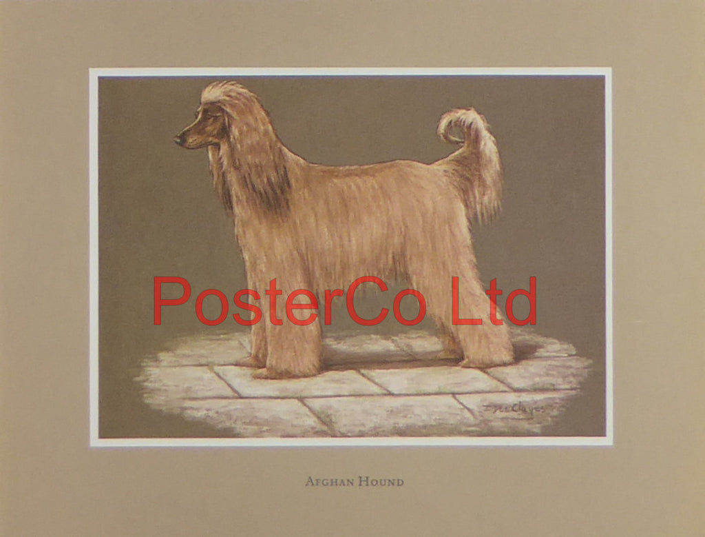"Afghan Hound - Jacqueline Des Clayes - 11""H x 14""W"