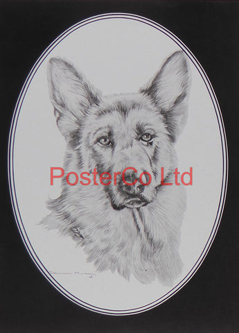 "German Sheperd - Framed Print - 14""H x 11""W"