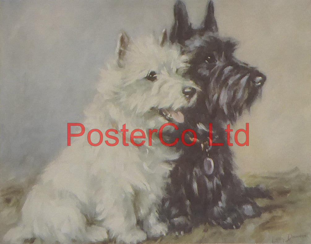 "Scottish Terrier - Lucy Dawson AKA Mac - Felix rose - Framed Print - 11""H x 14""W"