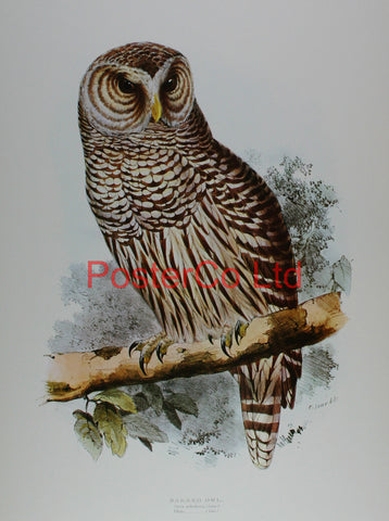 "Barred Owl (Strix Nebulosa) by Edward Lear - Framed Print - 20""H x 16""W"