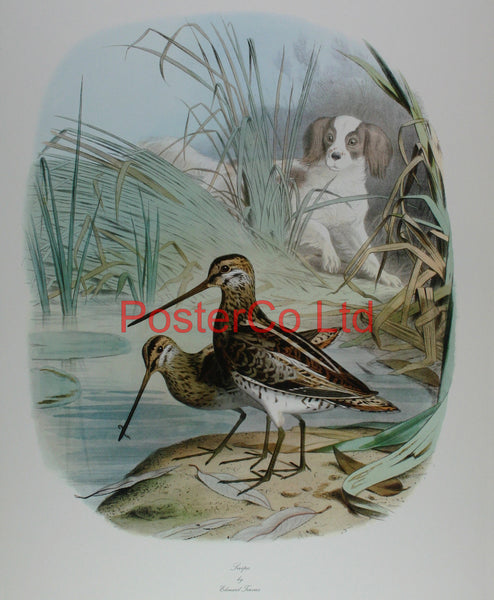 "Snipe by Edouard Travies - Framed Royle Print - 20""H x 16""W"