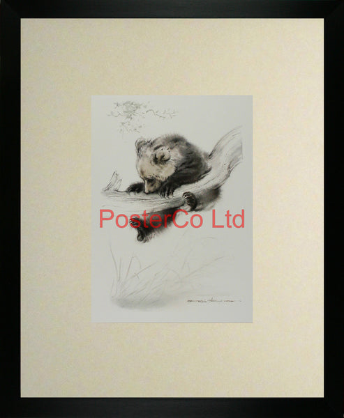 "Concentration (Bear Cub) - Ralph Thompson - Royle Publications - Framed Print - 20""H x 16""W"
