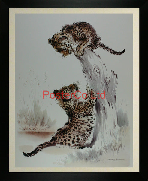 "Leopard cubs playing - Ralph Thompson - Royle Publications - Framed Print - 20""H x 16""W"