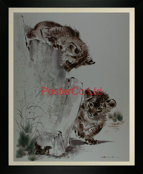 "Lion cubs with lizard - Ralph Thompson - Royle Publications - Framed Print - 20""H x 16""W"