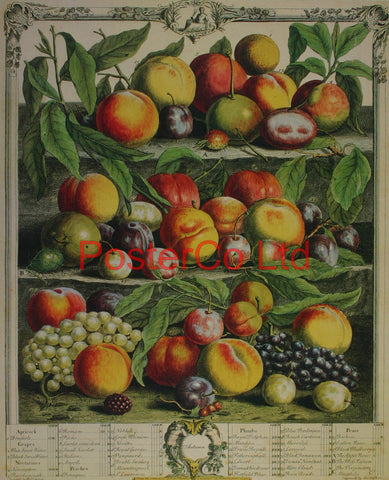 "Autumn - Robert Furbers Fruit in Season - Framed Print - 20""H x 16""W"