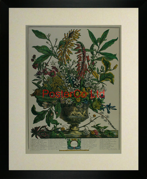 "January - Robert Furbers Flowers of the Month - Framed Print - 20""H x 16""W"