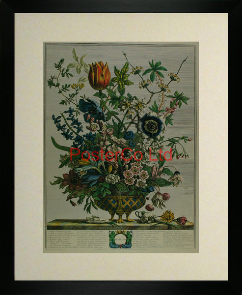 "February - Robert Furbers Flowers of the Month - Framed Print - 20""H x 16""W"