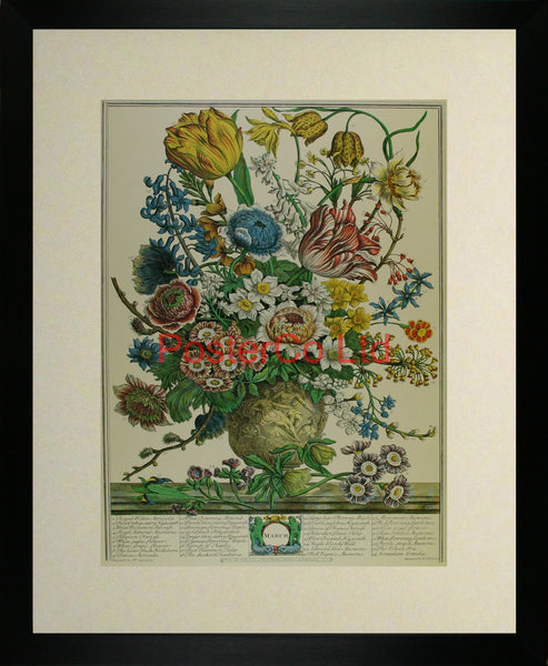 "March - Robert Furbers Flowers of the Month - Framed Print - 20""H x 16""W"