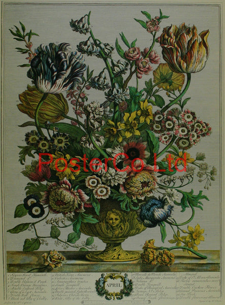 "April - Robert Furbers Flowers of the Month - Framed Print - 20""H x 16""W"