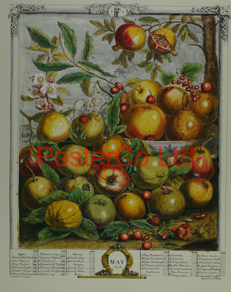 "May 1732 - Robert Furbers Months of Fruit - Framed Print - 20""H x 16""W"