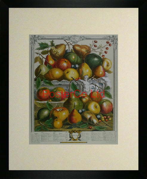 "January 1732 - Robert Furbers Months of Fruit - Framed Print - 20""H x 16""W"