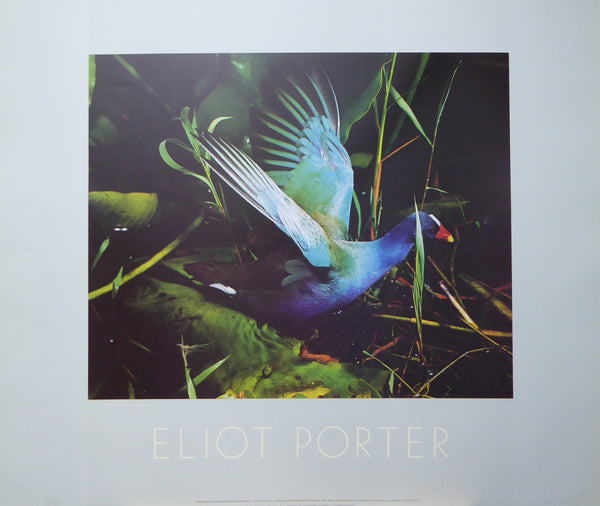 Purple Gallinule Eliot Porter 1987 New York Graphics Society (Genuine and Vintage) Crate3 B7