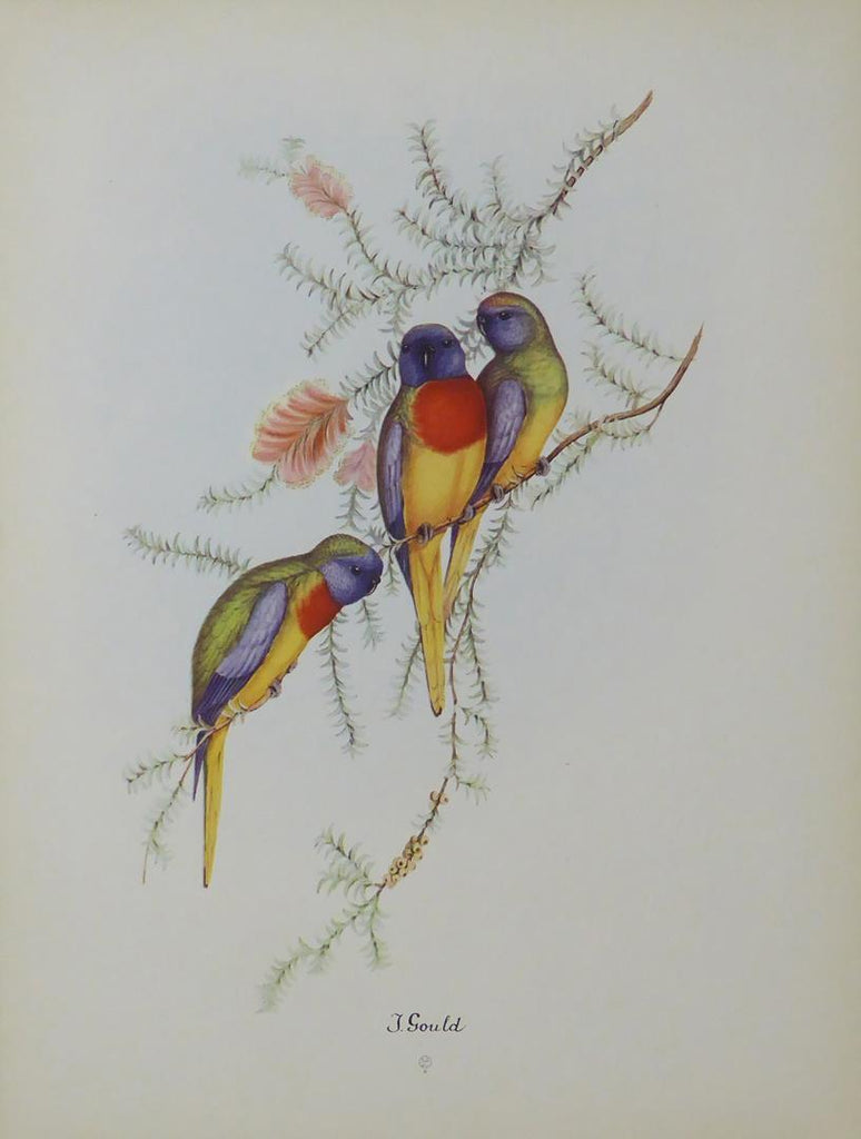 Birds sitting on a Branch John Gould (3)