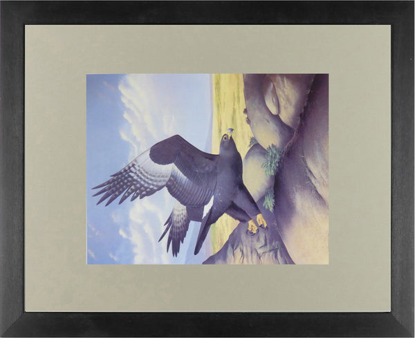 Black Eagle (Verreaux's Eagle)