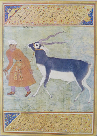 A Black Buck led by his keeper Manohar