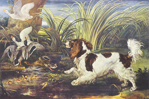 A Spaniel frightening ducks James Ward