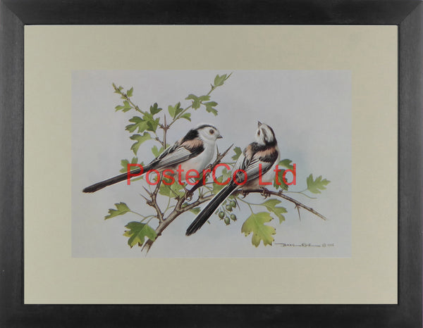 "Long Tailed Titmouse - Basil Ede - Royle 1975- Framed Vintage Poster Print - 12""H x 16""W"