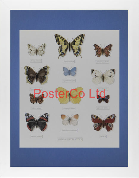"United Kingdom Species of Butterflies - Framed Print - Royle - 16""H x 12""W"