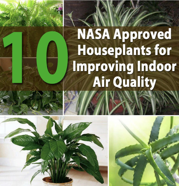 Indoor Plants for a Healthier and or Happier Home
