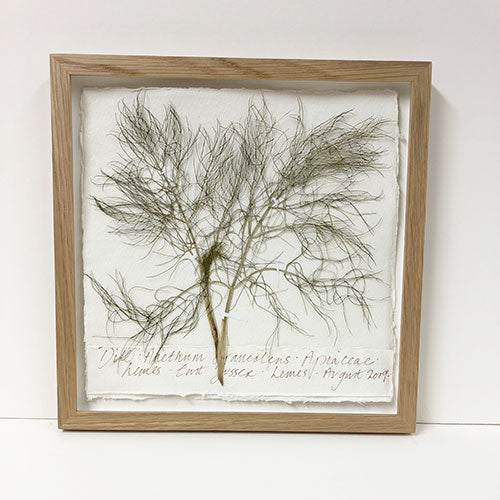 Framed | Pressed Dill Original by Peta King
