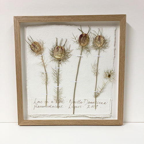 Framed 9 x 9 | Pressed Love In A Mist Original by Peta King