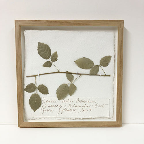 Framed 9 x 9 | Pressed Bramble Original by Peta King