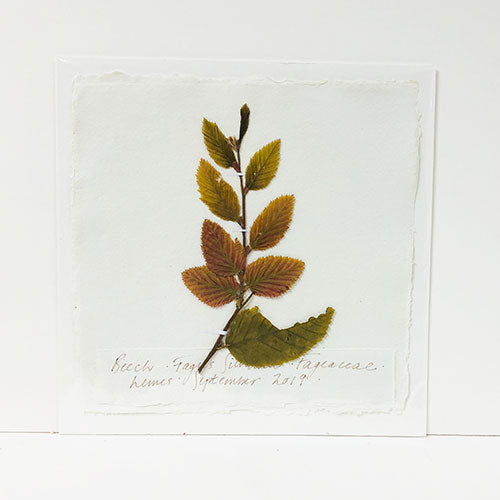 Pressed Beech Original by Peta King