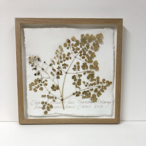Framed 9 x 9 | Pressed Chinese Meadow Rue Original by Peta King