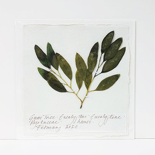 Pressed 9 x 9 Eucalyptus Original by Peta King