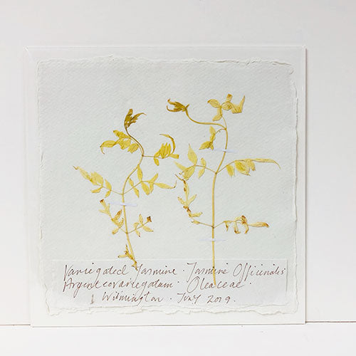 Pressed 9 x 9 Variegated Jasmine Original by Peta King