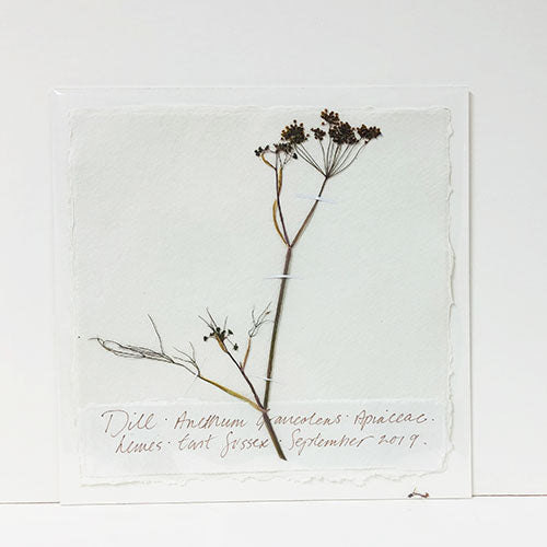 Pressed 9 x 9 Dill Original by Peta King