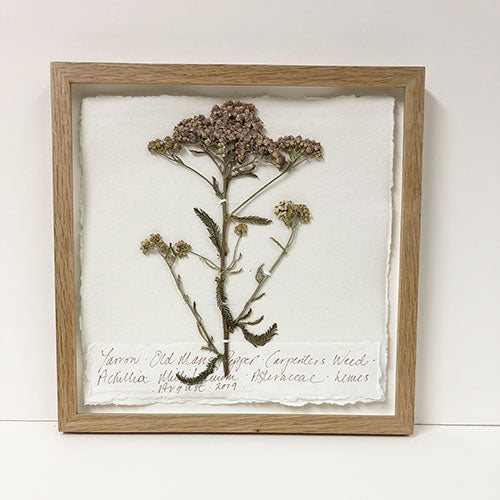 Yarrow Original by Peta King | 9 x 9 Pressing Framed
