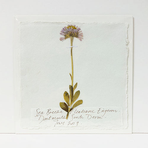 Pressed 9 x 9 Sea Breeze Fleabane Original by Peta King