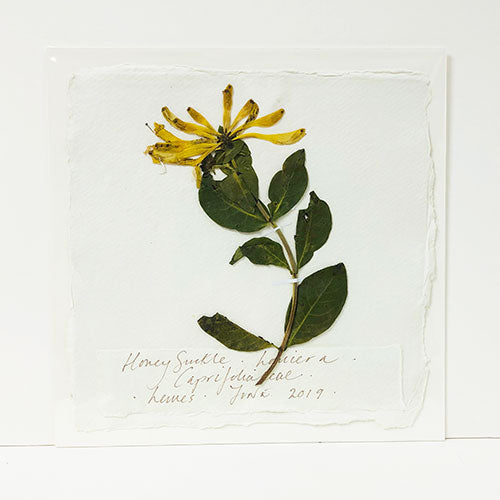 Pressed 9 x 9 Honeysuckle Original by Peta King