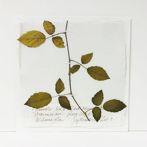 Pressed 9 x 9 Bramble Original by Peta King