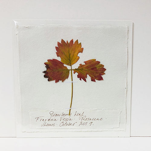 Pressed 9 x 9 Strawberry Leaves Original by Peta King