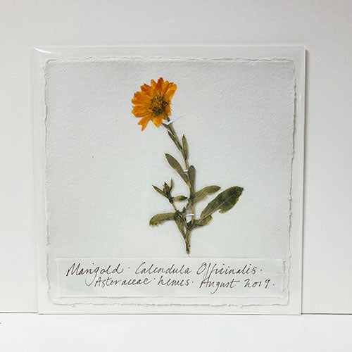 Pressed 9 x 9 Marigold Original by Peta King