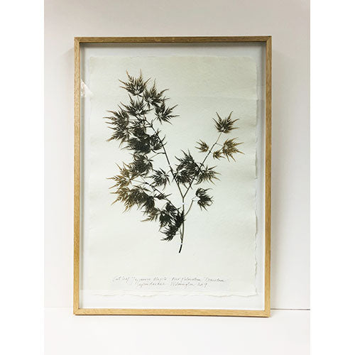 Framed A2 | Pressed Japanese Maple Original by Peta King