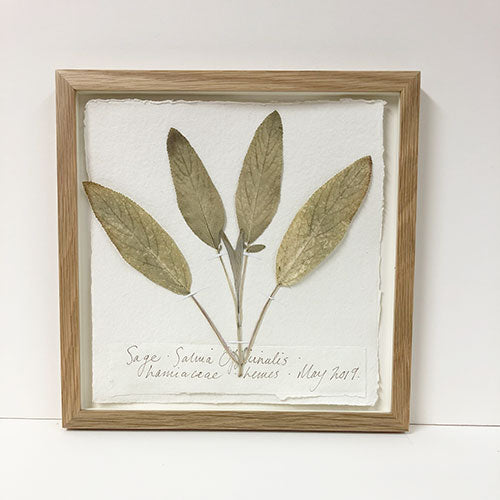 Framed 9 x 9 | Pressed Sage Original by Peta King
