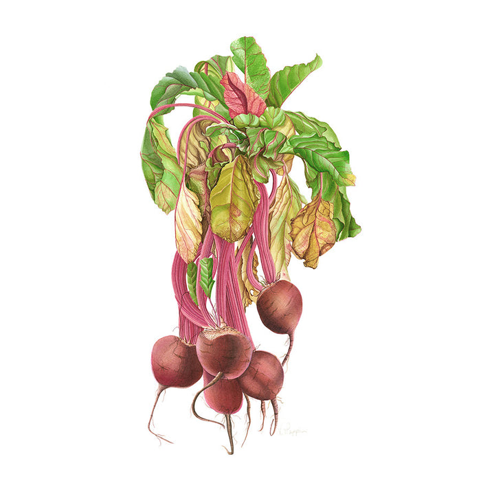 Beetroot By Vicky Mappin