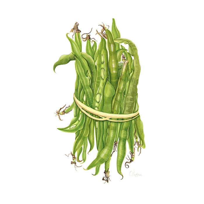 Broad Beans By Vicky Mappin