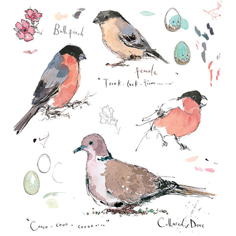 Bullfinch and Collared Dove By Madeline Floyd