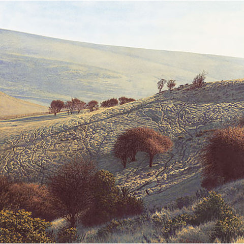 Bullock Hill By Michael Embden
