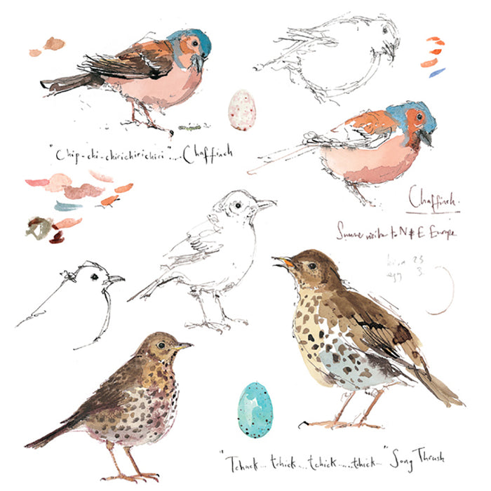 Chaffinch and Song Thrush By Madeline Floyd