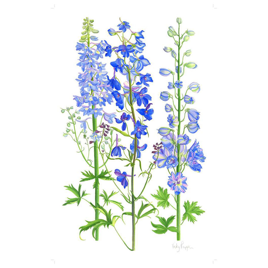 Delphiniums By Vicky Mappin