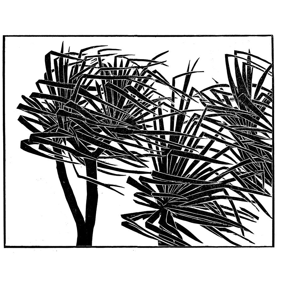 Palms Windswept By Bernard Lodge
