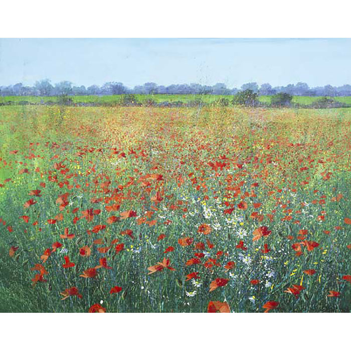Poppies By Paul Evans