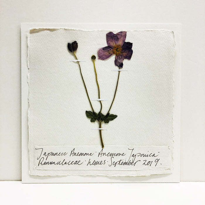 Pressed 9 x 9 Japanese Anemone Original by Peta King